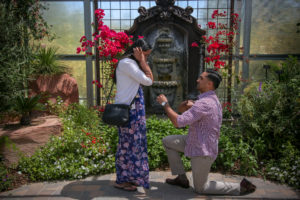 Special Event Photographer – Marriage Proposals
