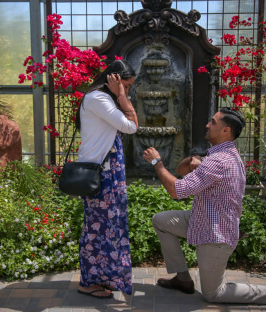 Special Event Photographer - Marriage Proposals